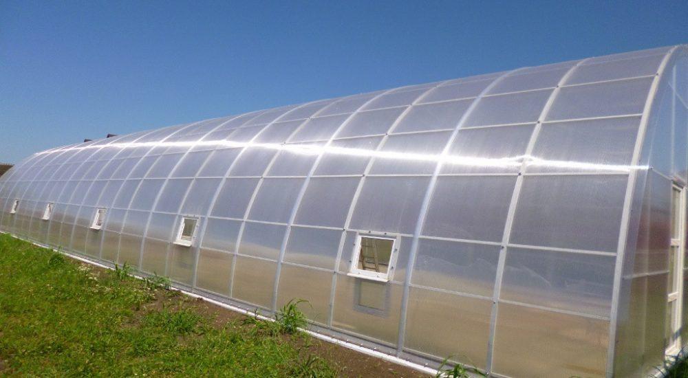 Размеры теплицы из поликарбоната — стандартные габариты, оптимальные, парники шириной 2 метра, нестандартные, фото